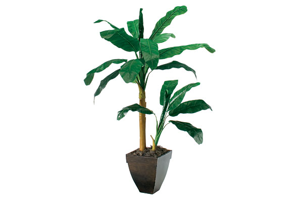 Silk Double Banana Tree