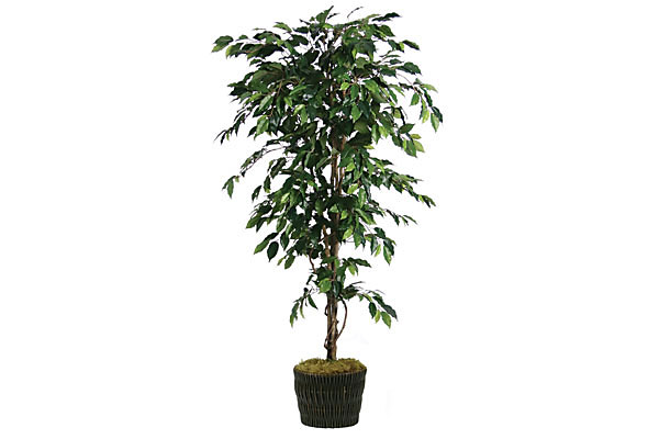 Silk Ficus Tree In Basket