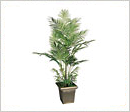 Rent Silk Trees